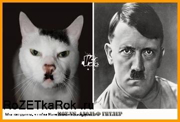 Животные против знаменитостей