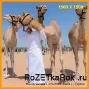 Как отдыхает наследный Принц Дубая Шейх Хамдан бин Мухаммед бин Рашид Аль Мактум